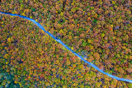 Autumn colorful forest. Aerial view from a drone over road between autumn trees in the forest. 版權商用圖片