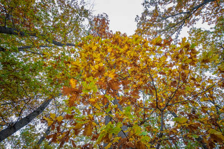 The beauty of autumn colors. View from down to top to colorful leaves and beautiful sky.