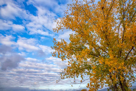 The beauty of autumn color. Tree with yellow leaves and beauty sky.