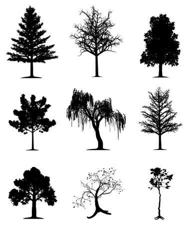 silhouette arbre hiver: Collecte des arbres