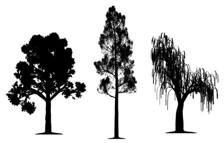 weeping: Oak, forest pine and weeping willow tree