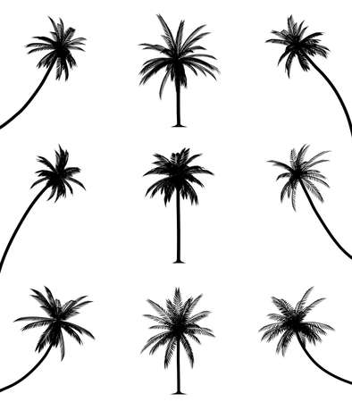 palm tree isolated: Palm trees