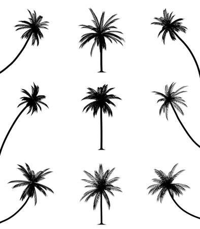 sombras: Palmeiras Ilustra��o