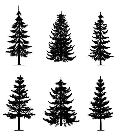 sapin: Pine collection d'arbres Illustration