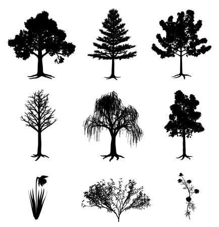 Trees narcissus chamomile and bush Illustration