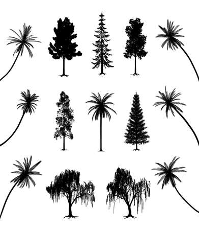 conifers: Trees with roots and palms Illustration