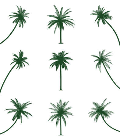 Green palm trees Ilustrace