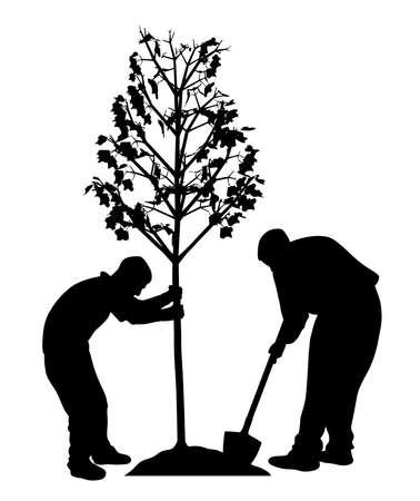 Dos hombres plantando una ilustración de vector de árbol sobre fondo liso