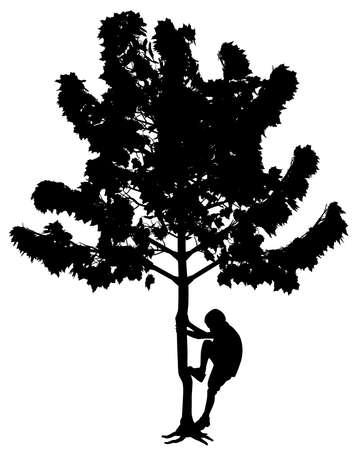 Little boy climbing up a tree