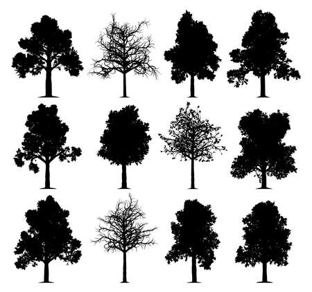 Oak tree silhouettes isolated on white background. Collection of 12 oak trees. EPS file available.