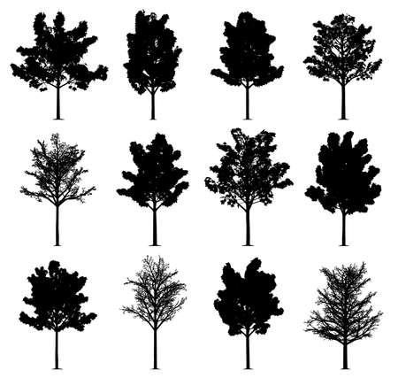 Sylwetki drzewa klonowego na białym tle. Kolekcja 12 klonów. Dostępny plik EPS. Ilustracje wektorowe