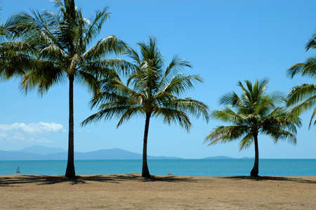 Palm trees by the ocean in Australia Stock Photo