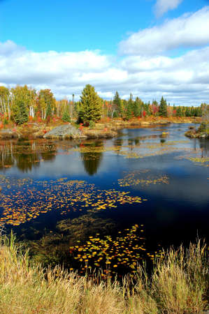 Pond with water lillies in the fall in Ontario Stock Photo