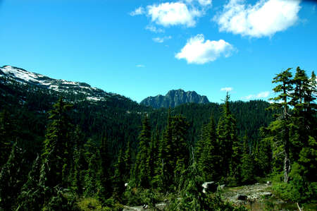 This photo was taken at the top of Patons Lookout in the Seymour Conservation reserve in North Vancouver