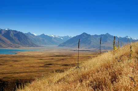 Lupinen en heuvels in de Mackenzie Land, Zuidereiland, Nieuw-Zeeland