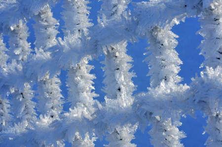 Hoar frost on netting