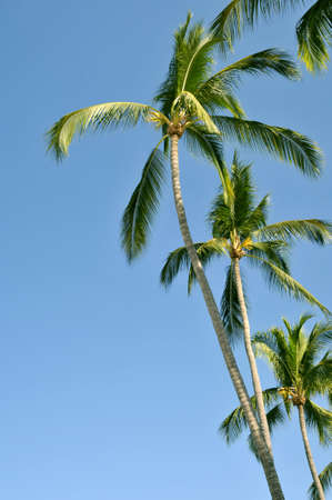 Fractie van palmbomen tegen de hemel Stockfoto