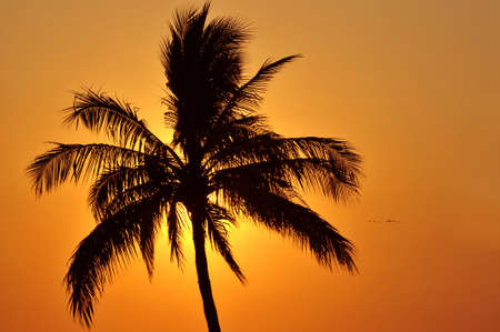 Palm tree silhouette at sunset in Mexico Stock Photo - 4575392