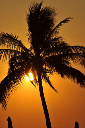 Palm tree silhouette at sunset in Mexico