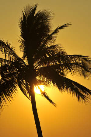 Palm tree sunset in Mexico Stock Photo - 4575412