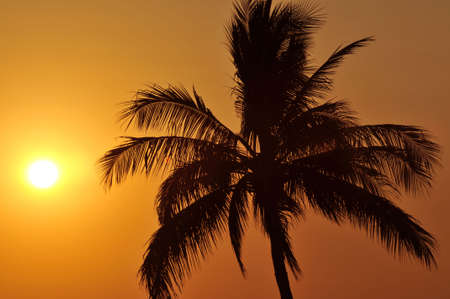 Palm tree backlit at sunset in Mexico