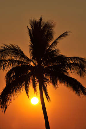 Silhouette of palm tree at sunset in Mexico Stock Photo