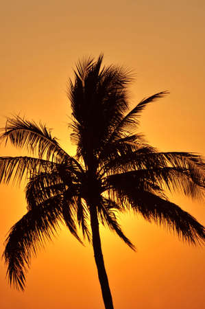 Silhouette of palm tree backlit at sunset in Mexico Stock Photo