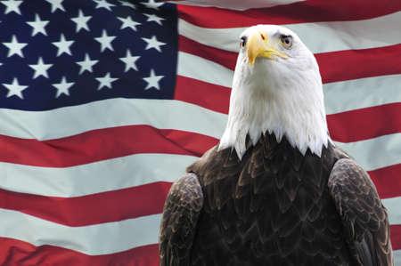 halcones: Majestuosa �guila calva en frente del pabell�n de EE.UU. Foto de archivo