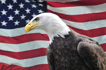 Majestic Bald Eagle looking sideways in front of USA flag Stock Photo
