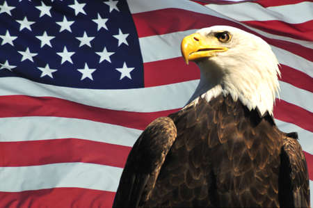 eagle flying: Majestic Bald eagle and USA flag Stock Photo
