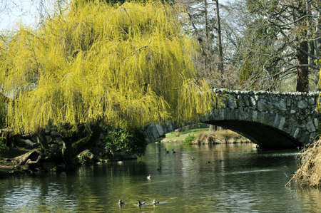 Beacon Hill park pond in the spring in Victoria, BC Stock Photo