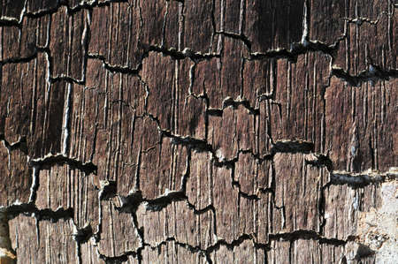 Tree trunk bark with texture and cracking photo