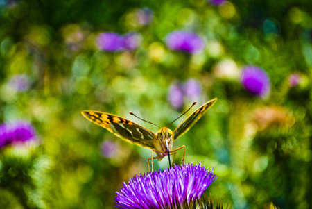 A yellow and black butterfly or moth sitting on a dainty purple flower with green background