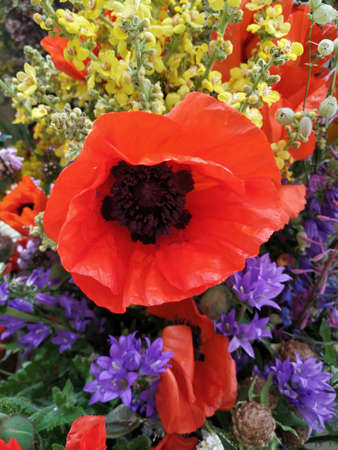 wild poppy is surrounded by a variety of colorful flowers that emphasize its beauty