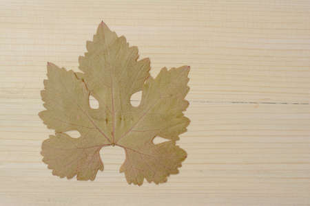 The lone grape leaf stands alone on the old wood, which reminds me of the sad days of autumn 스톡 콘텐츠