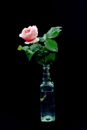 one beautiful rose in a transparent bottle is a very beautiful painting for performing various types of decoration work 스톡 콘텐츠