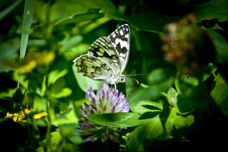 in a very beautiful green environment a beautiful black and white butterfly is sitting in the bolts 스톡 콘텐츠