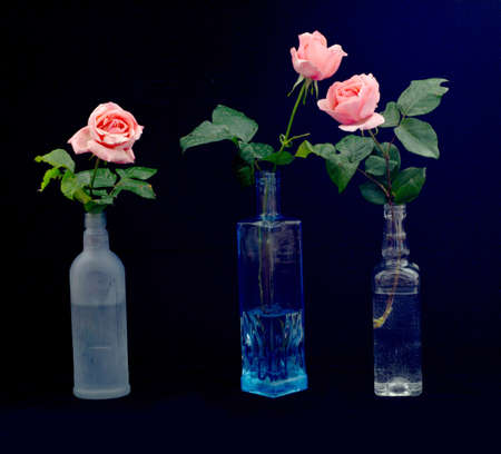 on a black background in bottles are three pink roses, two of which are located next to each other separately