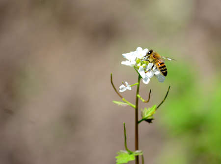 on a small branch sits a bee that collects nectar for making 스톡 콘텐츠