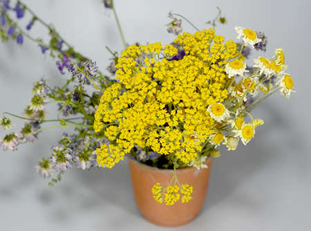 Wild evergreen chamomile flowers in a beautiful clay cup