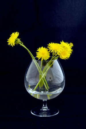 The yellow flowers of the twig are placed in a glass cup filled with water and placed in front of the background. 스톡 콘텐츠