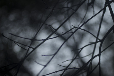 Haunting dark atmospheric image of ghostly tree branches without leaves against background of winter night sky. Artistic color digital photo with shallow depth of focus.