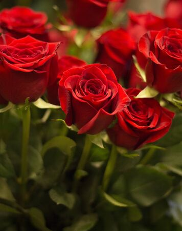 saint valentine's day: Bunch of red roses bouquet of flowers prepared for Saint Valentines Day in florists store flower shop close-up photo.