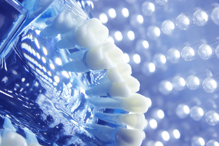 orthodontist: Dentists dental teeth teaching model showing each tooth, gum, root, implant, decay, plaque and enamel.