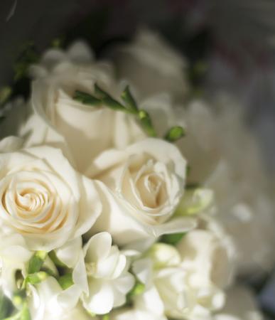 registro: Ceremonia de boda civil no religiosa ceremonia de registro ramo nupcial de rosas flores de la novia.