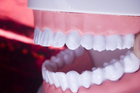 Dentists perfect white teeth teaching dental plastic model.