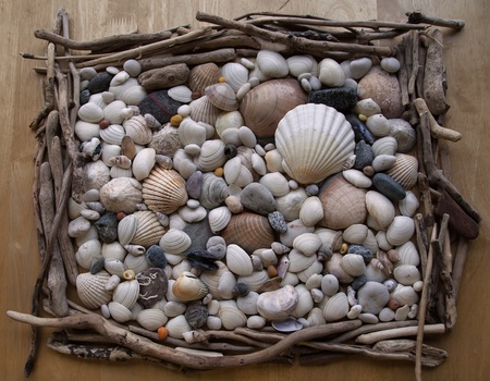 Shells - texture / background - pebbles, driftwood and stones from beach. Stock Photo - 16436206