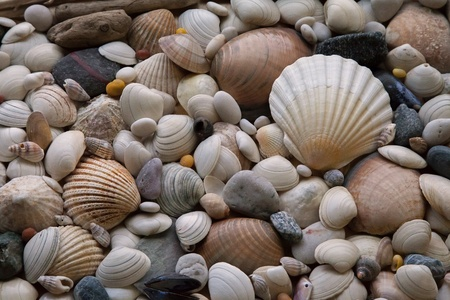 Shells - texture or background - variety of pebbles, stones and driftwood. Stock Photo - 16436207