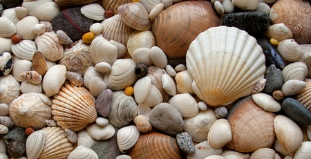 Shells - texture  background - pebbles and stones from beach. photo