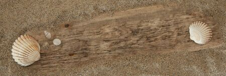 Driftwood and seashells background texture with plank half buried in sand. Space for Text  Copy. Stock Photo